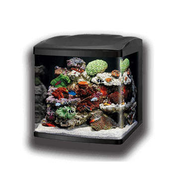 Aquatic Treasures of Las Vegas, Nevada is Your Source For the Best Saltwater Aquariums and Aquarium Supply