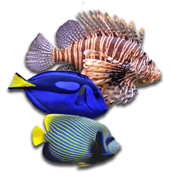 Aquatic Treasures Saltwater Livestock Selection - Las Vegas, Nevada's Premium Saltwater Fish & Livestock Store